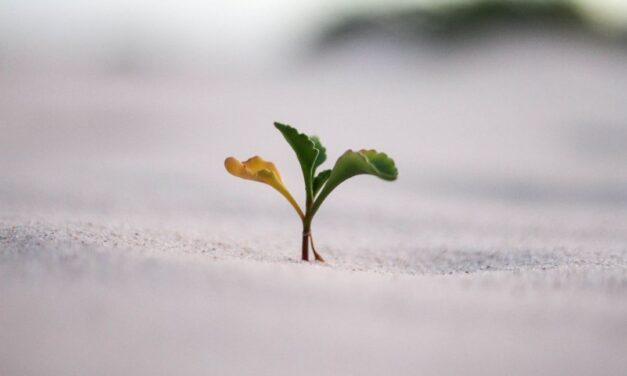Que tal parar de comer todas as sementes?